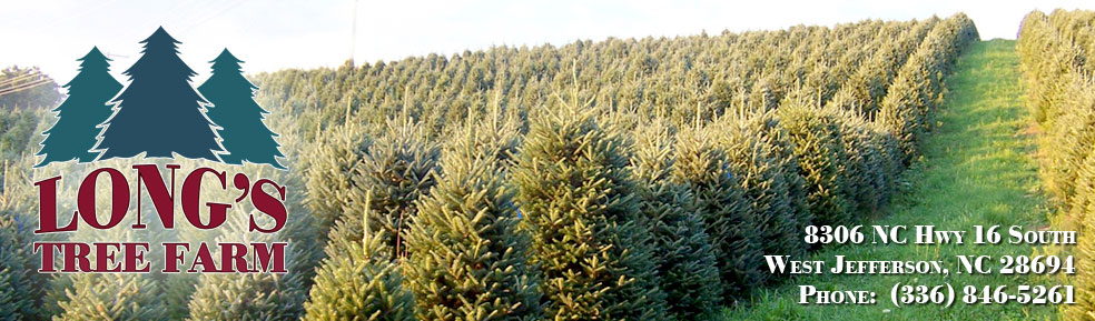 longs tree farm north carolina christmas trees west jefferson nc