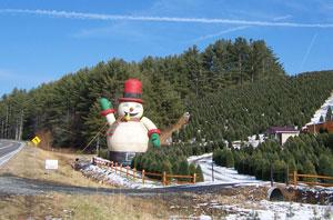 Choose & Cut North Carolina Christmas Trees - Long's Tree Farm ...