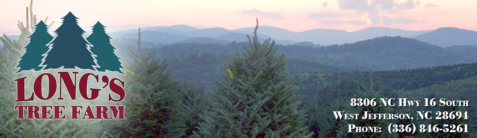 Nc Christmas Tree Farm.Long S Tree Farm North Carolina Christmas Trees West Jefferson Nc
